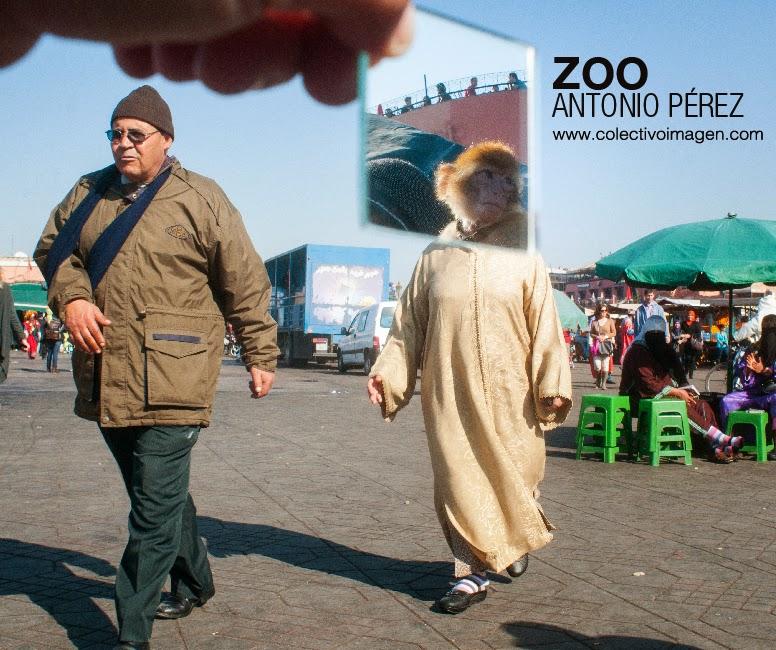 Zoo - Antonio Perez